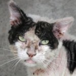 cat with skin issues
