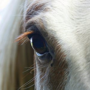 close_up_of_horses_eye