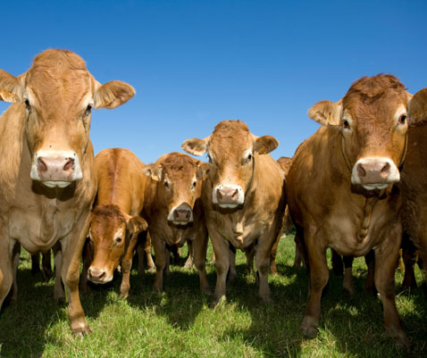 Natural health care for farm animals