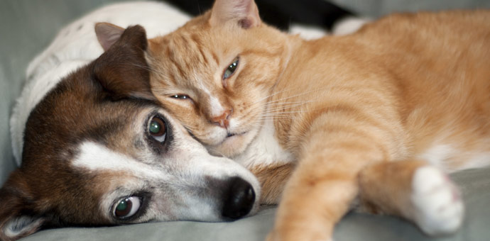 Natural health care for animals