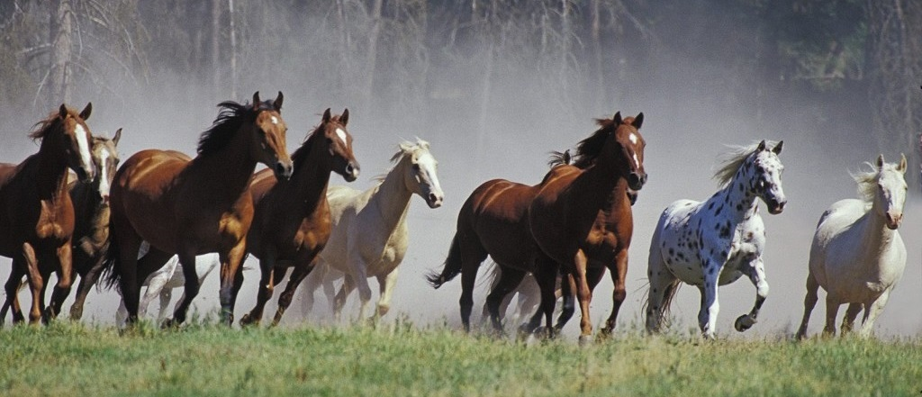 Natural health care for horses