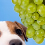 sad_dog_and_grapes