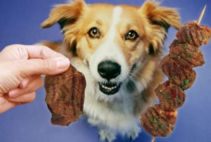photo_of_beef_kebab_for_dog