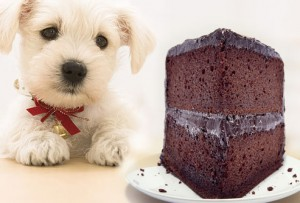 sad_dog_and_chocolate