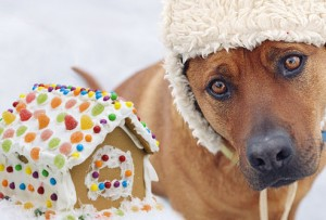sad_dog_and_gingerbread_house