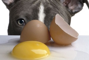 sad_dog_and_raw_egg