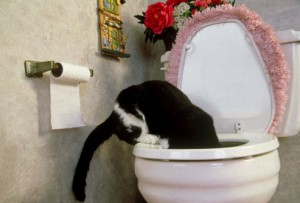 cat_drinking_from_toilet