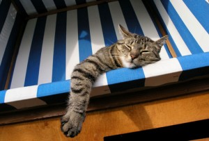 cat_in_striped_chair
