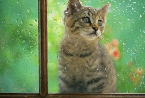cat_looking_through_rainy_window