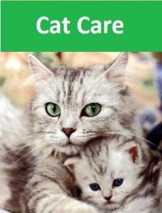 Cat Care pic new
