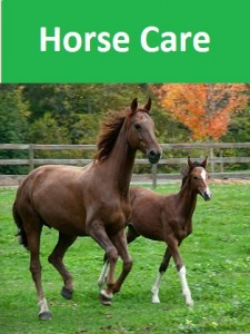 Horse care pic new