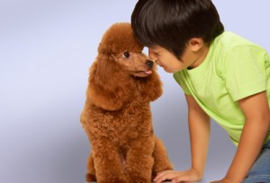 boy_with_poodle 8