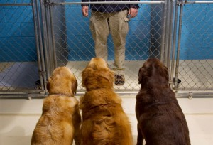 dogs_looking_at_man_in_cage 17