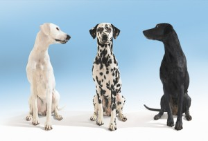 three_dogs_on_white 16