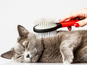 cat-grooming-with-brush